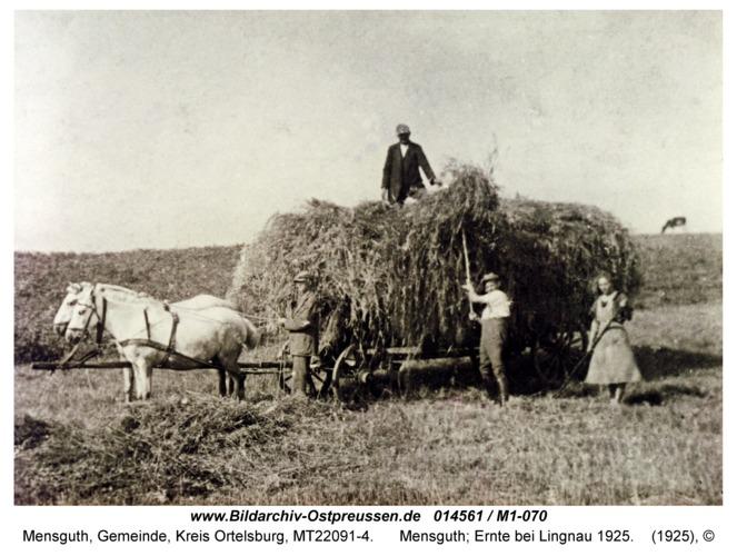 Mensguth, Ernte bei Lingnau 1925