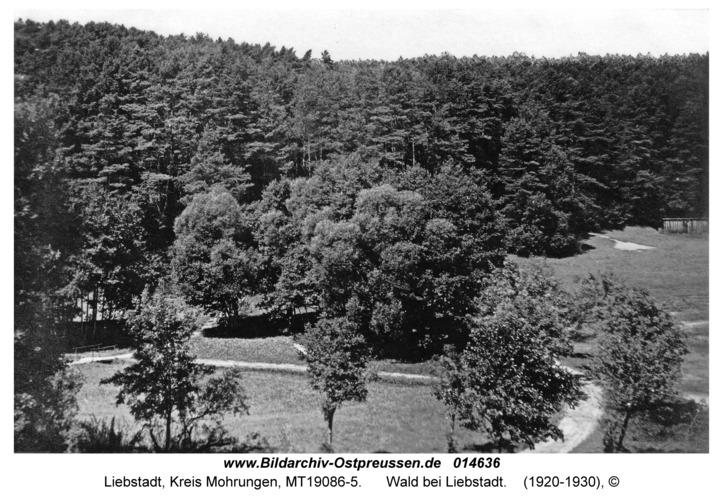 Liebstadt, Wald bei Liebstadt