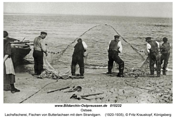 Ostsee, Lachsfischerei, Fischen von Butterlachsen mit dem Strandgarn