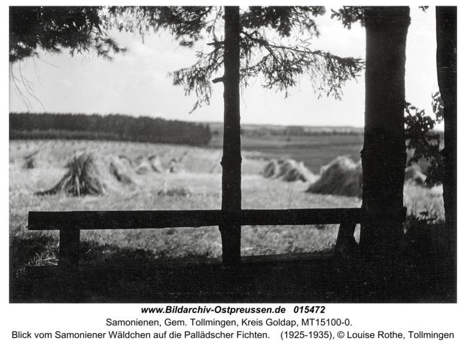 Reiterhof, Blick vom Samoniener Wäldchen auf die Pallädscher Fichten