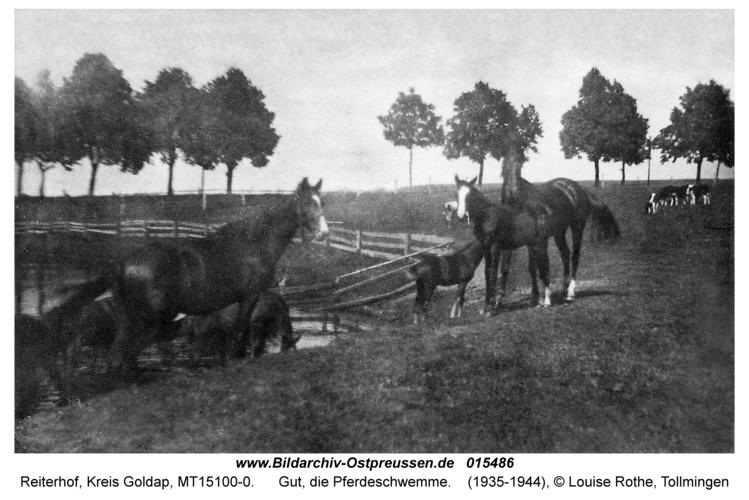 Reiterhof, Gut, die Pferdeschwemme