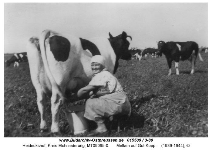 Heideckshof, Melken auf Gut Kopp