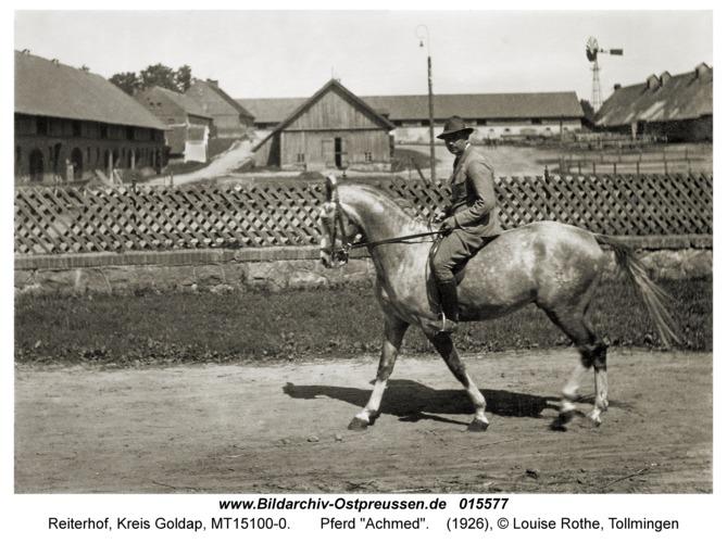 """Reiterhof, Pferd """"Achmed"""""""