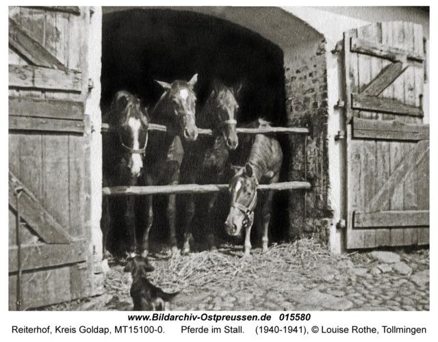 Reiterhof, Pferde im Stall