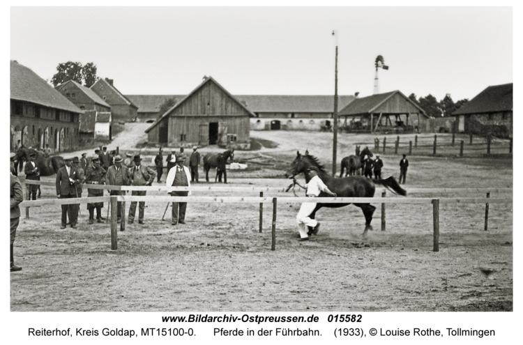Reiterhof, Pferde in der Führbahn
