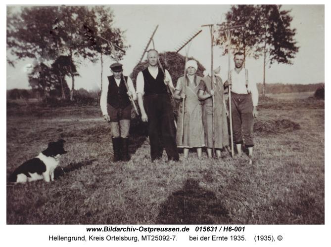 Hellengrund, bei der Ernte 1935