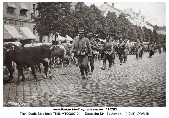 Tilsit, Deutsche Str., Beutevieh
