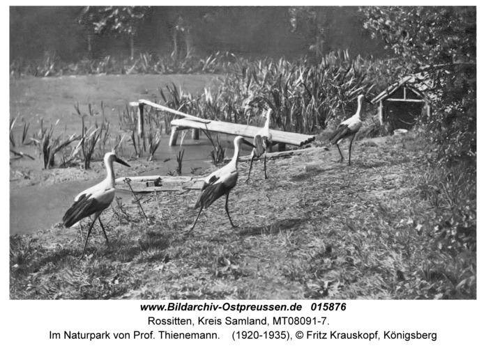 Rossitten Kr. Samland, Im Naturpark von Prof. Thienemann