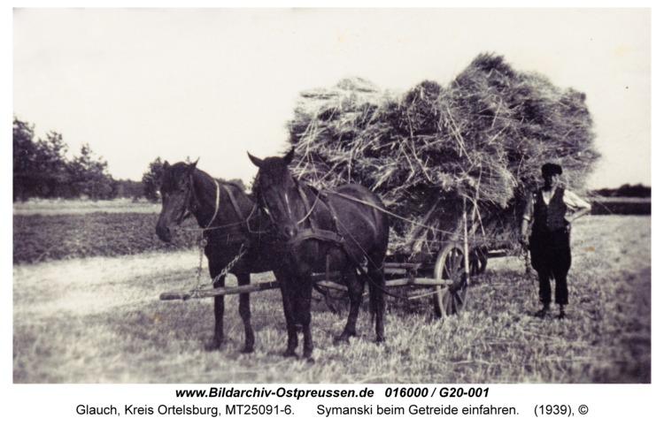 Glauch, Symanski beim Getreide einfahren