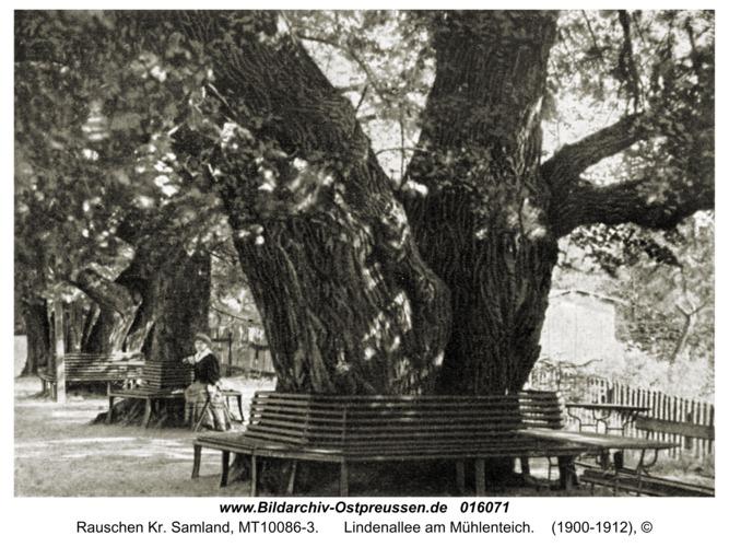Rauschen Kr. Samland, Lindenallee am Mühlenteich