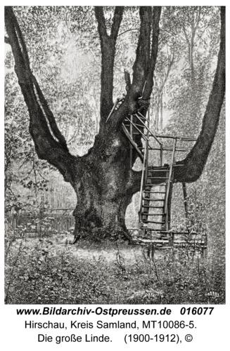 Hirschau, Die große Linde