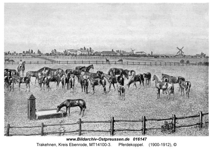 Trakehnen, Pferdekoppel