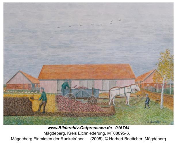 Mägdeberg Einmieten der Runkelrüben