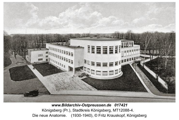 Königsberg, Die neue Anatomie