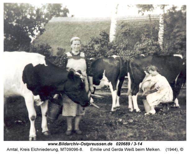 Amtal, Emilie und Gerda Weiß beim Melken