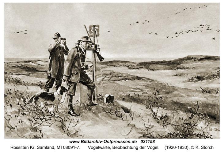Rossitten Kr. Samland, Vogelwarte, Beobachtung der Vögel