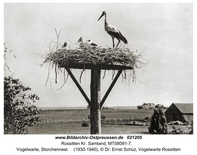 Rossitten Kr. Samland, Vogelwarte, Storchennest