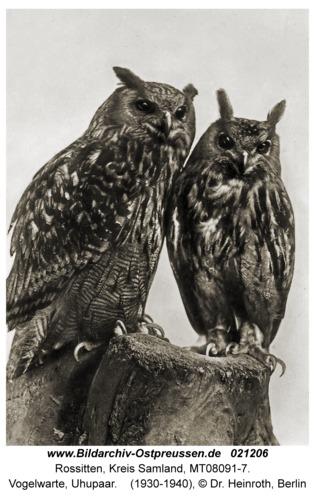 Rossitten Kr. Samland, Vogelwarte, Uhupaar