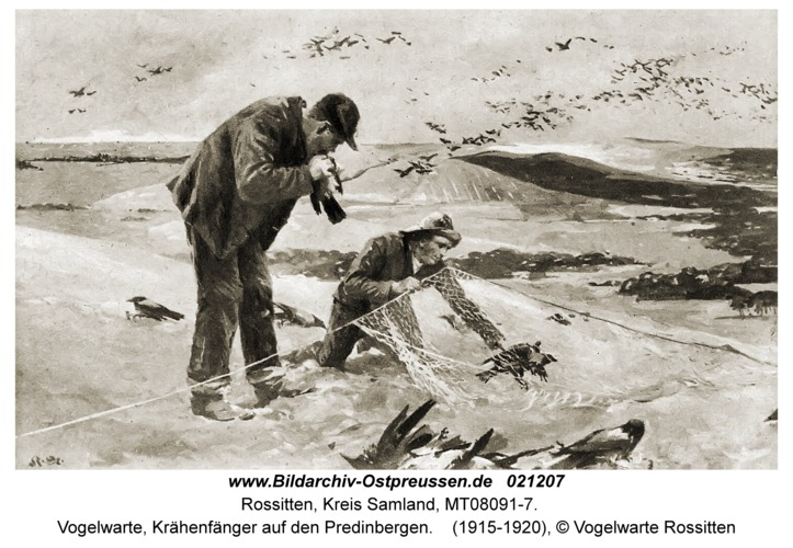Rossitten Kr. Samland, Vogelwarte, Krähenfänger auf den Predinbergen