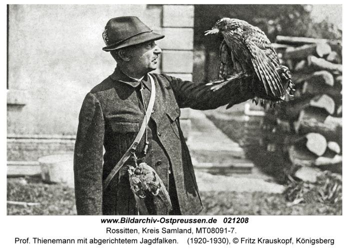 Rossitten Kr. Samland, Prof. Thienemann mit abgerichtetem Jagdfalken