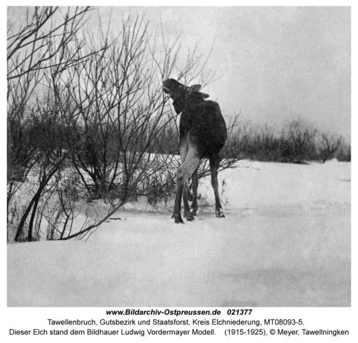 Tawellenbruch fr. Tawellningken, Dieser Elch stand dem Bildhauer Ludwig Vordermayer Modell