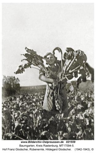 Baumgarten Kr. Rastenburg, Hof Franz Glodschei, Rübenernte, Hildegard Glodschei