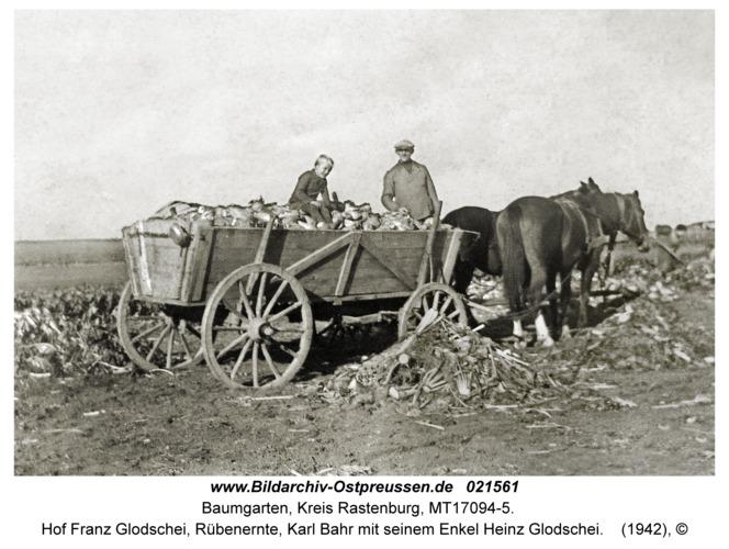 Baumgarten Kr. Rastenburg, Hof Franz Glodschei, Rübenernte, Karl Bahr mit seinem Enkel Heinz Glodschei