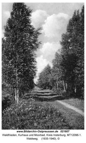 Waldfrieden Kr. Insterburg, Kurhaus und Moorbad, Waldweg