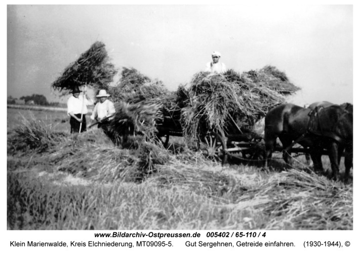 Klein Marienwalde, Gut Sergehnen, Getreide einfahren