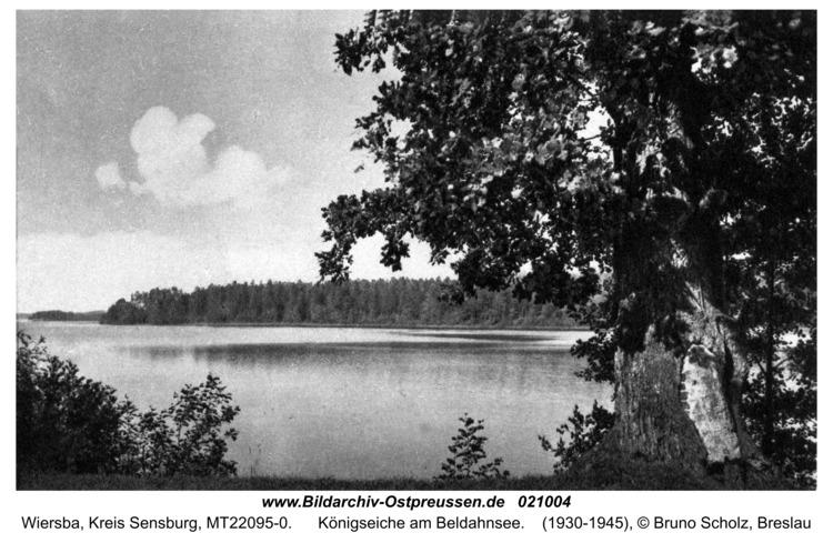 Wiersba, Königseiche am Beldahnsee