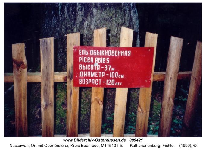 Nassawen, Katharienenberg, Fichte