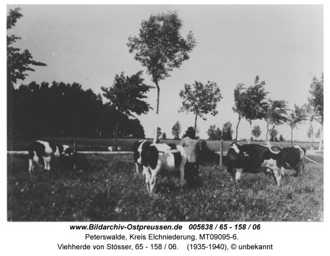 Peterswalde, Viehherde von Stösser, 65 - 158 / 06