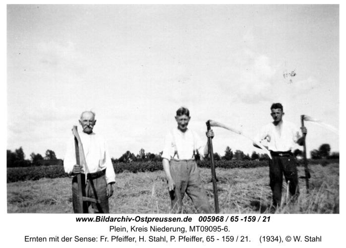 Plein, Ernten mit der Sense: Fr. Pfeiffer, H. Stahl, P. Pfeiffer, 65 - 159 / 21