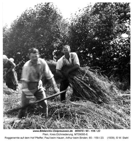 Plein, Roggenernte auf dem Hof Pfeiffer, Paul beim Hauen, Arthur beim Binden, 65 - 159 / 23