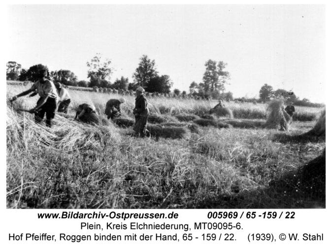Plein, Hof Pfeiffer, Roggen binden mit der Hand, 65 - 159 / 22