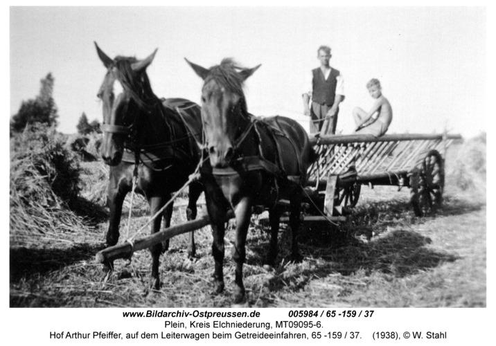 Plein, Hof Arthur Pfeiffer, auf dem Leiterwagen beim Getreideeinfahren, 65 -159 / 37