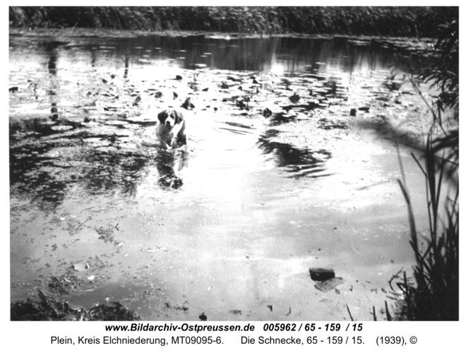 Plein, Die Schnecke, 65 - 159 / 15
