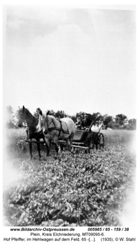 Plein, Hof Pfeiffer, im Hehlwagen auf dem Feld, 65 - 159 / 38