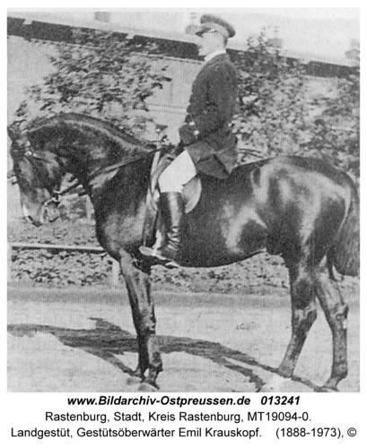 Rastenburg, Landgestüt, Gestütsoberwärter Emil Krauskopf