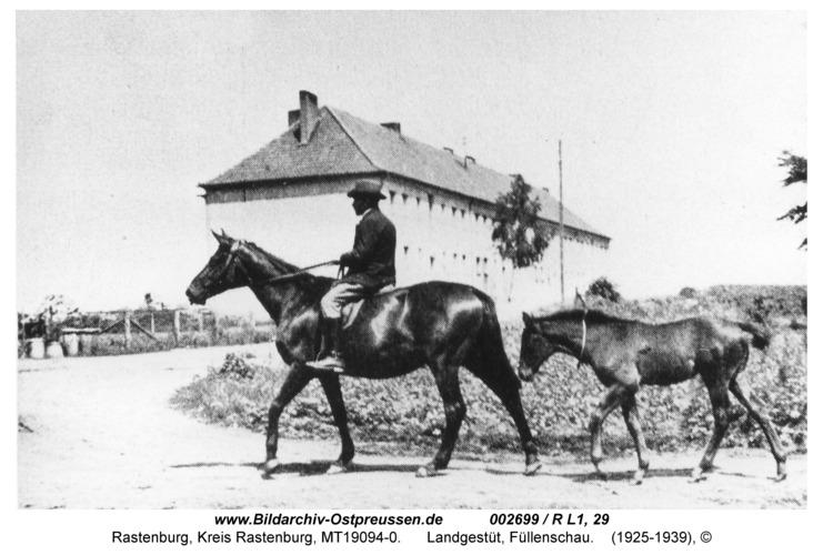 Rastenburg, Landgestüt, Füllenschau
