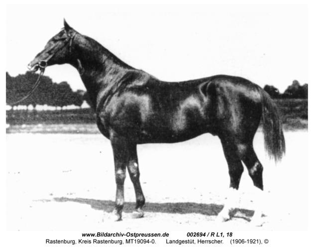 Rastenburg, Landgestüt, Herrscher