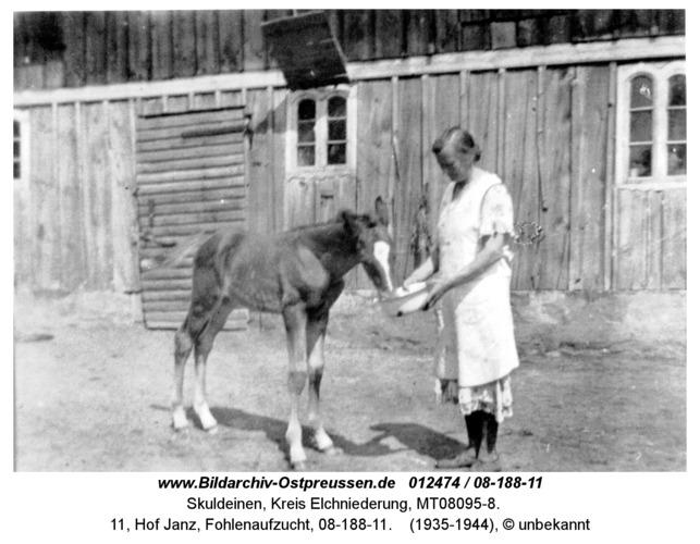 Skuldeinen, 11, Hof Janz, Fohlenaufzucht, 08-188-11
