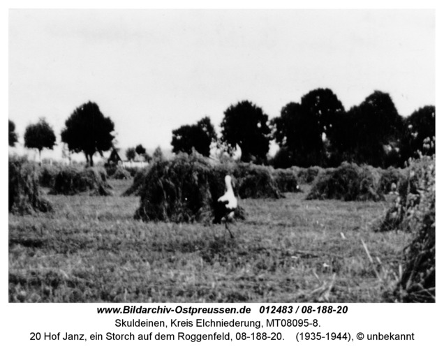 Skuldeinen, 20 Hof Janz, ein Storch auf dem Roggenfeld, 08-188-20