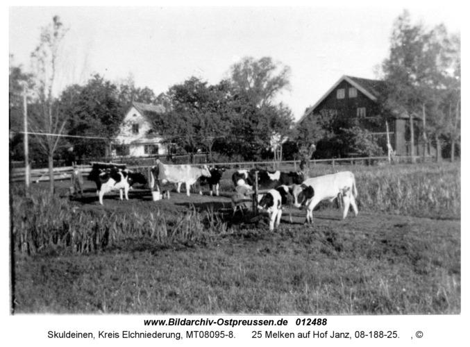 Skuldeinen, 25 Melken auf Hof Janz, 08-188-25