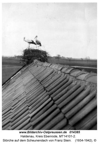 Haldenau, Störche auf dem Scheunendach von Franz Stein