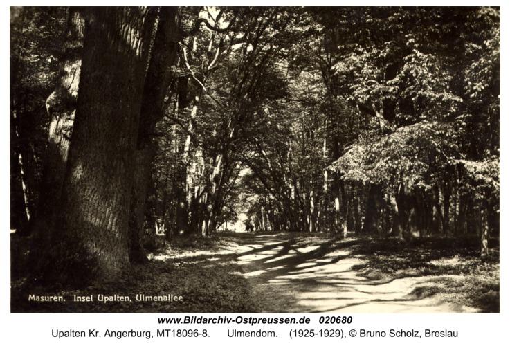 Upalten Kr. Angerburg, Ulmendom