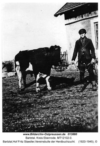 Bartztal, Hof Fritz Staedler, Vereinsbulle der Herdbuchzucht