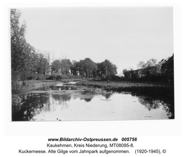 Kuckerneese. Alte Gilge vom Jahnpark aufgenommen